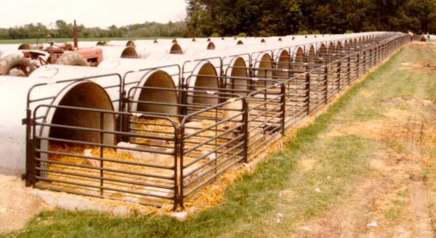 Portable Farrowing House Plans : Animal shelter pen livestock calf hut barn
