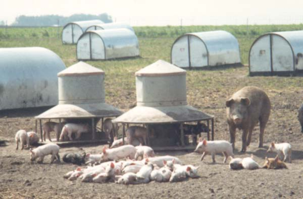 pasture feeder steel sale shelters cows hog swine used cfm portable feeders huts bytes farrowing livestock for